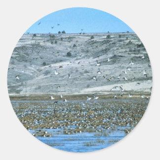 Pintail Flock Sticker