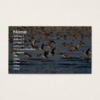 Pintails Business Card