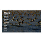 Pintails Business Cards