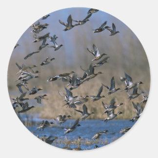 Pintails in Flight Round Sticker