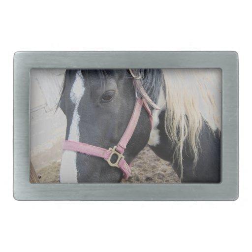 Pinte el caballo del Pinto Hebilla Cinturon Rectangular