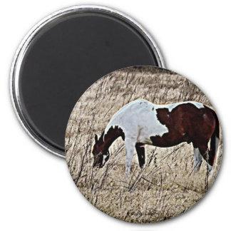 Pinte el caballo iman de frigorífico