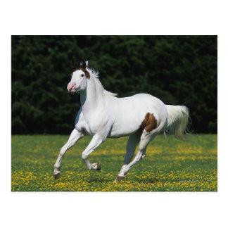 Pinte el caballo que corre en campo herboso tarjeta postal