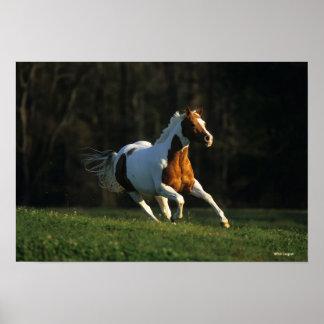 Pinte el caballo que corre rápidamente póster