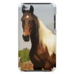 Pinte el caso de iTouch del caballo iPod Touch Cárcasa