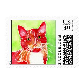 Pinte el gatito de AFRP