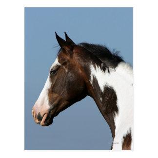 Pinte el Headshot 1 del caballo Tarjetas Postales