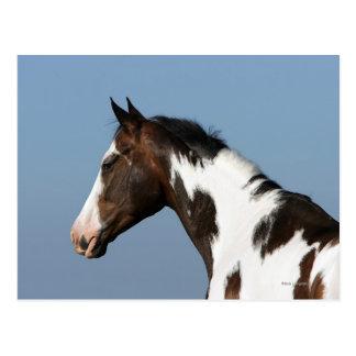 Pinte el Headshot 1 del caballo Postal