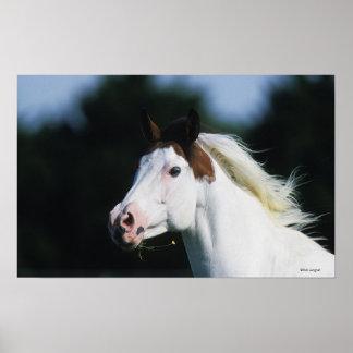 Pinte el Headshot 3 del caballo Póster