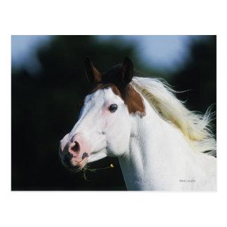 Pinte el Headshot 3 del caballo Postales