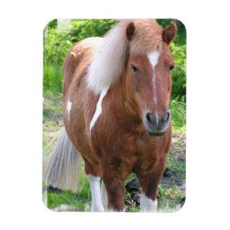 Pinte el imán del premio del caballo de proyecto