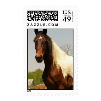 Pinte el sello del caballo