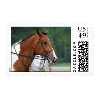 Pinte el sello del caballo de la demostración