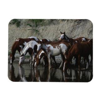 Pinte la consumición de los caballos imán rectangular