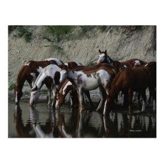 Pinte la consumición de los caballos tarjeta postal