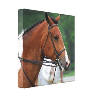 Pinte la impresión de la lona del caballo de la de impresion en lona