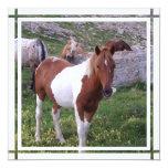 Pinte la invitación del caballo invitación 13,3 cm x 13,3cm