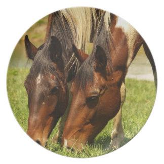 Pinte la placa del amor del caballo platos