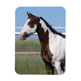 Pinte la situación del caballo imán flexible
