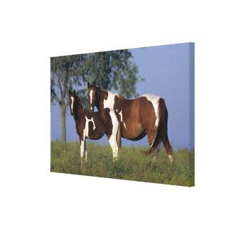 Pinte la yegua y el potro impresión en lona estirada