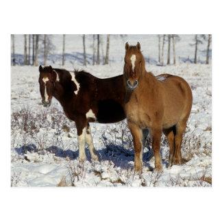 Pinte los caballos en la nieve postal