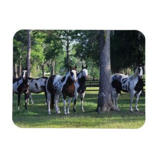 Pinte los caballos en los árboles imán de vinilo