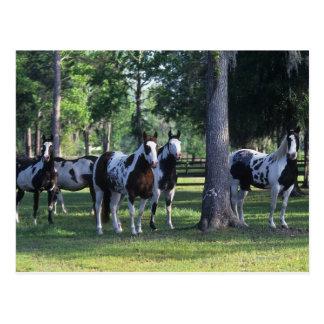 Pinte los caballos en los árboles tarjetas postales