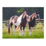 Pinte los caballos en pasto postales