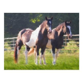 Pinte los caballos en pasto tarjetas postales