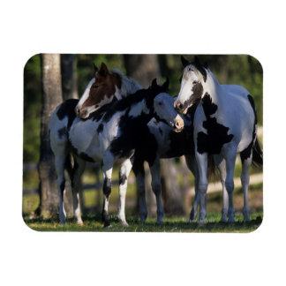 Pinte los caballos imán flexible