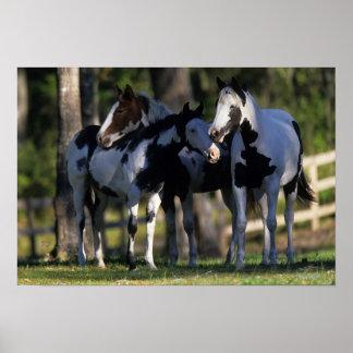 Pinte los caballos póster