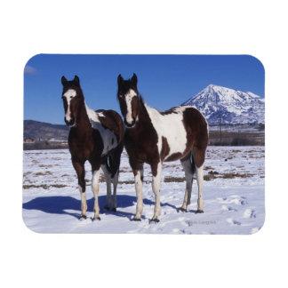 Pinte los caballos que se colocan en la nieve imanes de vinilo