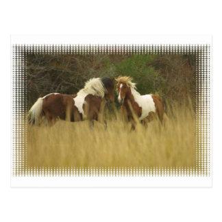 Pinte los potros en postal del campo