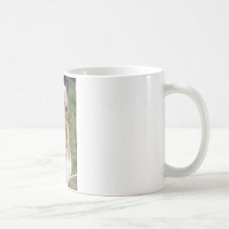 Pínteme una imagen taza básica blanca