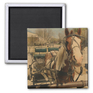 Pinto Buggy Horse Magnet
