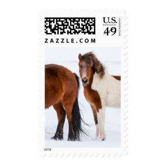 Pinto Colored Icelandic Horse Postage