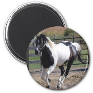 Pinto del caballo/de la pintura imanes de nevera
