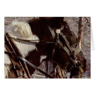 Pinto Draft Horse Card