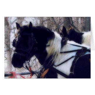 Pinto Draft Horses, Christmas Card