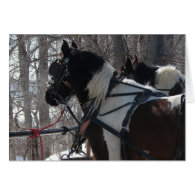Pinto Draft Horses, Christmas Greeting Cards