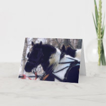 Pinto Draft Horses, Father's Day Card
