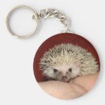 Pinto face hedgehog basic round button keychain