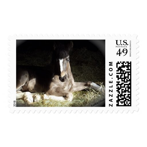 Pinto Filly Postage Stamp
