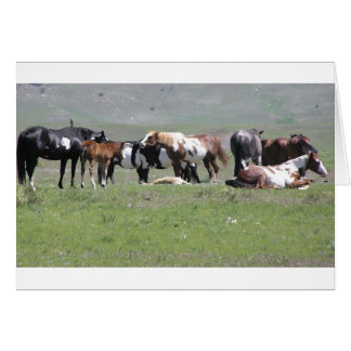 Pinto Herd, South Dakota Card