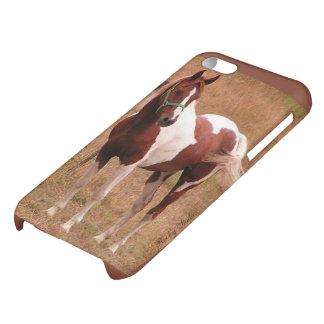 Pinto Horse Case iPhone 5C Case