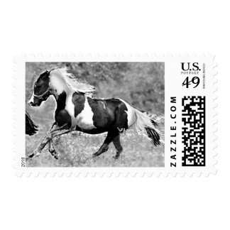 Pinto Horse Postage Stamps