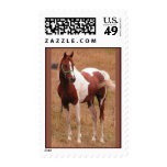Pinto Horse USPS Stamp #1