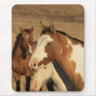 Pinto in Herd Mouse Pad