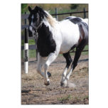 Pinto Paint Horse Dry-Erase Boards