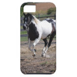Pinto Paint Horse iPhone 5 Cases